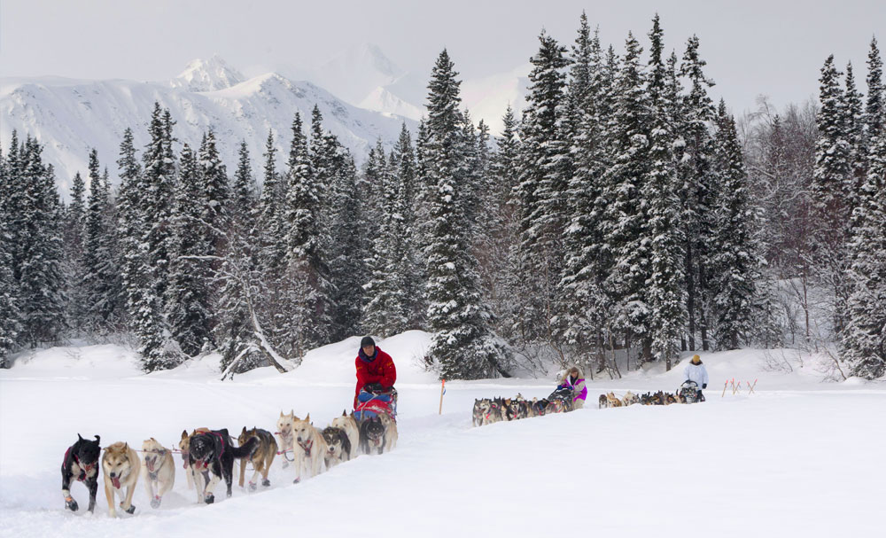 Follow Iditarod Tours