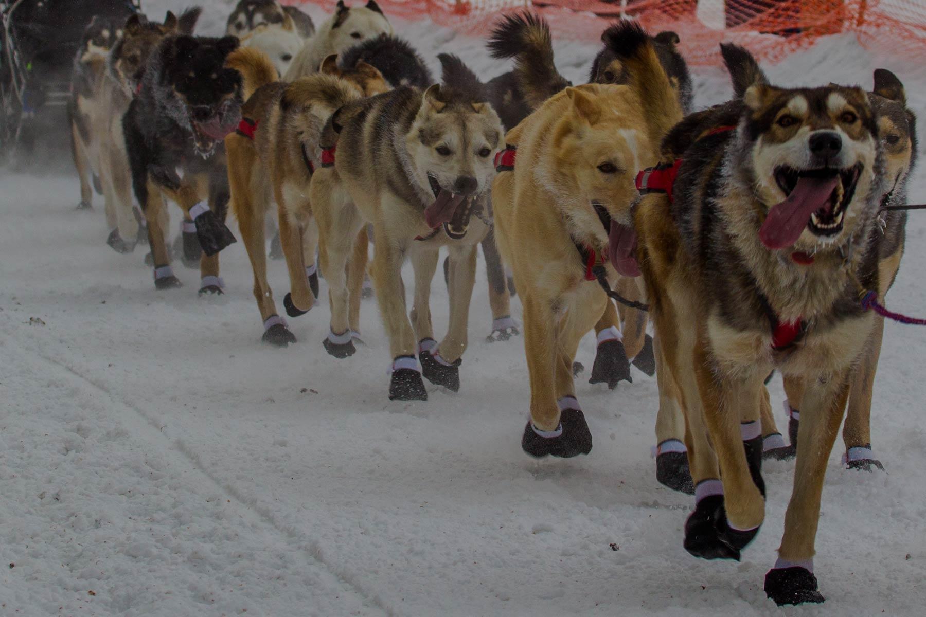 Iditarod Tours